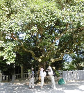 1409110919タブ・下見調査「宮地嶽神社」フットパス3971.JPG