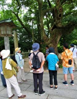 1908250911タブノキの説明を聞く参加者・写真「津屋崎里歩きフットパス」夏休みウオーク3920.JPG
