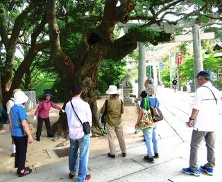 〈事務局日記〉0350:�A1807290915タブの木の下で説明する藤井えり子会員・夏休みウオーク267.JPG