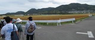 〈事務局日記〉0364:�@1905191013麦秋絶景を見る参加者・万葉歌碑フットパス・2309.JPG
