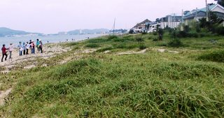 〈企画事業〉137・�@1507051045優・宮地浜の海浜植物群生地・「フットパス」ウオーク5439.JPG