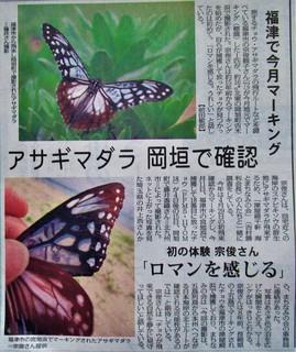 「アサギマダラ 岡垣で確認」記事掲載5月25日付毎日新聞福岡面7699.JPG