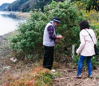 写真1511011428ハマボウ観察・第1回「津屋崎干潟」で第4期ガイド養成講座008.jpg