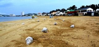 写真1706300819作業風景とごみ袋・福津市委託の�滑ツ境開発が海岸清掃353.JPG